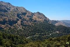 Route de  Tala Guilef , la source du sanglier (Ath Salem) Tags: algrie tiziouzou djurdjura montagne assi youcef youssef tala guilef         singe magot boghni