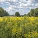 summer field3
