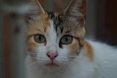 El gato mirn (portalealba) Tags: gatos portalealba pentax pentaxk50 animales cmpeta 1001nights