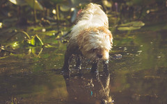Outdoor-1304 (EbE_inspiration) Tags: 2016 serene outdoor dog dirty walk pool wet