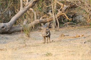Namibia Dangerous Game Safari - Caprivi Strip 29