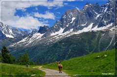 La balade du bouquetin (Patchok34) Tags: massifdumontblanc hautesavoie france rhônealpes montagne mountain nikonflickraward nikon nikonfrance flickraward chamonix