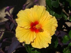 DSC00551 (gregnboutz) Tags: flower flowers bloomingflower bloomingflowers brightflowers colorfulflowers colorfulflower colorfulmacro colorfulmacros macro macros macroflower macroflowers m
