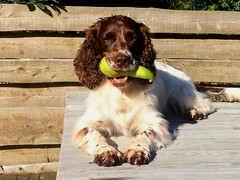 ZigZag with stolen fruit (Flemming Andersen) Tags: zigzag fruit dog