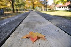 _DSC0503 (Nour Arnold) Tags: maple canada fall autumn