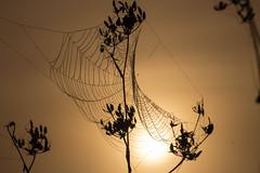 cobweb silhouette (diwan) Tags: city sun color silhouette sunrise canon germany geotagged deutschland eos place cobweb magdeburg stadt sonne sonnenaufgang 2012 spinnennetz fotogruppe saxonyanhalt sachsenanhalt canoneos650d fotogruppemagdeburg geo:lon=11672982 geo:lat=52096537