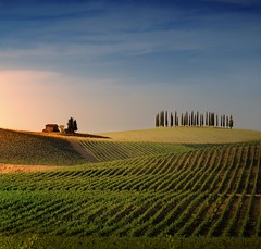 Tuscan house harmoniously set on the vineyards of Casale (Bn) Tags: sunset red summer italy sun sunlight house holiday colour tree green colors leaves florence oak