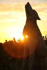 Awakening (TempusVolat) Tags: camera sunset dog sun slr digital canon geotagged eos nice interesting flickr heart image awakening good picture hound like pb best spooky favourites demon getty keep dslr favourite gw myfavourites canoneos gareth liked digitalslr howling howl tempus hunstanton awaken keeper 60d canon60d volat canoneos60d eos60d mrmo