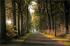 autumn light is here again..... (Zino2009 (bob van den berg)) Tags: road morning autumn woman color bike cycling early warm path famous rays deventer bobvandenberg zino2009 walkoffamelight