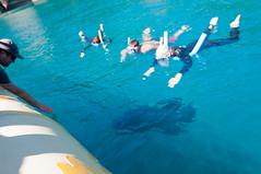 Snorkeling @ Whitsundays, Australia (TomStardust) Tags: trip summer nikon honeymoon australia august agosto vacanza vacanze 2012 viaggiodinozze d90