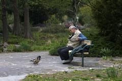 Mann mit Enten im Donaupark, Wien (5089_120419) (Bildredaktion Wien) Tags: vienna wien austria 22 duck mann enten ente donaustadt parkbank donaupark parkanlage
