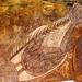 Arte aborígine