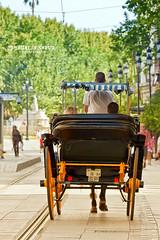 Siviglia, Sevilla (walterlocascio) Tags: carrozza cavalli calesse sivigliasivilleandalusiaspagnawalterlocasciowwwwalterlocascioit