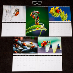 2013 Ladybugs Premium Calendars 11x17 (Tc Morgan) Tags: macro bug insect photography big forsale calendar sale quality large insects bugs glossy lucky ladybird ladybug ladybugs onsale premium goodluck calendars 11x17 2013 tcmorgan