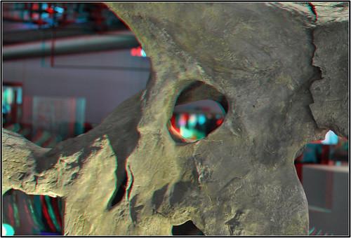 Skull Triceratops 3D