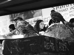 Feeding time (Simon Crubellier) Tags: city uk england blackandwhite bw london birds canon blackwhite europe camden ixus londonist simoncrubellier ixus70 58174mm
