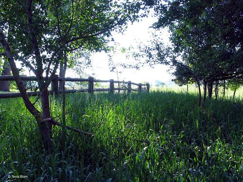 Photo - Bobolink Trail