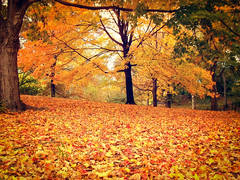 Central Park - Autumn Trees and Leaves - New York City (Vivienne Gucwa) Tags: nyc newyorkcity autumn trees fall nature beautiful landscape pretty centralpark manhattan gothamist curbed yellowleaves orangeleaves wnyc nycphoto nycautumn pilesofleaves cityphoto newyorkphoto falllandscape autumnlandscape centralparkautumn fallnewyorkcity nycphotography centralparktrees manhattanfall fallnyc newyorkcityautumn manhattanautumn fallcentralpark autumnfoliagecentralpark viviennegucwa viviennegucwaphotography autumnfoliagenyc fallfoliagenyc fallfoliagenewyorkcity