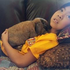 A girl and her bunny. #LuckyLadiesRabbitry (Snapshots by Nixy J Morales) Tags: holland rabbit bunny square squareformat normal lop iphoneography instagramapp uploaded:by=instagram