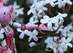 I like flowers (esper zero) Tags: blue woman anime flower girl japan female toy toys japanese star jasmine 4 manga hobby collection dai figurines figure online animation collectible burst ban iv figures episode collectibles pvc bandai phantasy bfigure jfigure racaseal