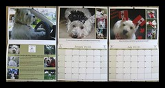 """""""Once More In Print"""" (ellenc995) Tags: riley westie westhighlandwhiteterrier calendar 2013 westiesinneed friends thesunshinegroup coth supershot sunrays5 coth5 pet100 challengeclub akob thegalaxy"""