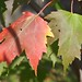 Bayfield Trip - Fall 2012 - Fall Leaves