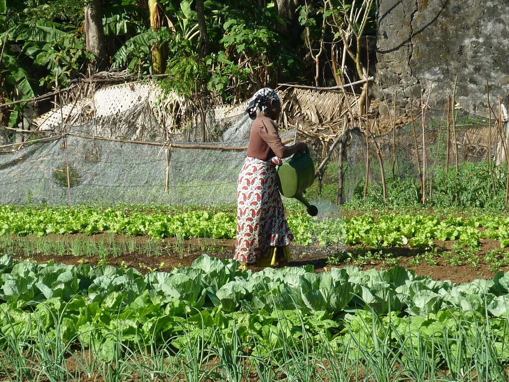Comores ©Emeline OUDIN (10)