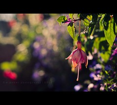 HBW! (w.mekwi photography [here & there]) Tags: plants sunlight flower closeup dof depthoffield rays hbw bokehwednesday nikond7000 wmekwiphotography mekwicom