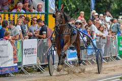 070fotograaf_20160728_032.jpg (070fotograaf, evenementen fotograaf) Tags: 070fotograaf kortebaandraverij voorschoten 2016 paarden draven kortebaan paardenmarkt nederland netherlands holland harness racing paardesport paardensport draverij drafsport harnessracing
