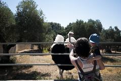 Granja Aventura y Alquzar (7) (Fernando Soguero) Tags: avestruz ostrych granjaaventura barbastro somontano huesca animales animals