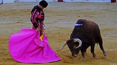 El Maestro Cayetano (Fotomondeo) Tags: alicante alacant espaa spain hoguerasdesanjuan fogueres toro toros corridadetoros matador torero bull bullfight bullfighter bullring cayetano fujifilmxm1