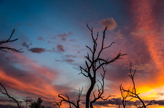Loving this sunset (DingoShoes - life's a dream) Tags: sunset sky clouds beautiful silhouette trees branches nature naturelover wanderlust lakewetherell menindee nsw australia outback light ilovephotography ilovesunsets nikond7000 afsnikkor18105mm13556ged