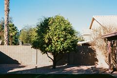 92990002 (alexdotbarber) Tags: 1125 arizona c41 kodakektar100 phoenix voigtlander40mmf14 voigtlanderbessar3a analog colornegative f8 rangefinder tree