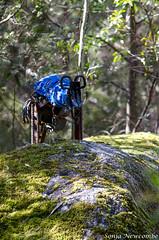 _SLN9774 (sonja.newcombe) Tags: tid tidbinbilla australia canberra nikon d7000 sigmalens