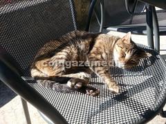 20151106_114906 (coldgazemedia) Tags: photobank stockphoto cat animal mallocra majorca spain espaa spainishisland balearicislands campanet