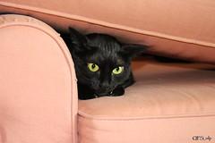 Gremlin Kat by QFS_mlp (QueenFaeeStudio) Tags: canon catseyes black nero gatto blackcats gioco game fun havingfun magic cats felini gatti mici katze gatos blackcat