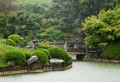 Rain At the Koi Pond (HorsePunchKid) Tags: brooklynbotanicgarden japanesehillandpondgarden gothamist