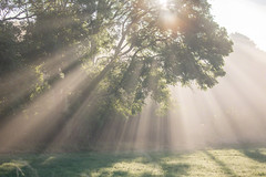 Sunbeams (WaterBugsPics) Tags: tree sunbeam green shadow nopeople intothesun blue