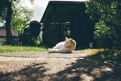 Mum's Garden 7 (katarzynaadamczyk) Tags: cat garden mums vintage spring canon canon550d sigma sigma1750