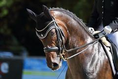 IMG_7535 (dreiwn) Tags: dressage dressur dressuur pferd reitturnier turnierreiten pferdesport horse horseback horseriding equestrian reitverein dressurprfung kandare doublebridle reiten pferde reitplatz ridingarena