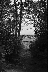 Out of the woods (marisjukss) Tags: tadoussac quebec river trip caffenol film bw olympus35sp