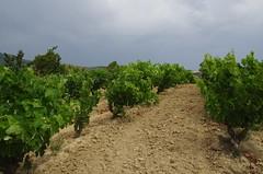 IMGP8524 (Lucifer's Gaze) Tags: pentax k5  spain summer   winery  vinyard  cellar  rioja docarioja  sierradetolono