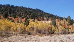 Pretty fall colors 1 (Aggiewelshes) Tags: phone stylo september 2016 hiking jardinejuniper fallcolors landscape scenery trees