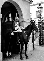 Household Cavalry (littlestschnauzer) Tags: household cavalry horse guard guards duty guarding soldier england uk august 2016 tourist attraction royal uniform capital city mounted military battalion nikon d7200 whitehall