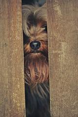(Luanna Espinola) Tags: cachorro dog cenário portão animaldeestimação