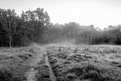 Nebelwiese (REAL PLUS) Tags: hamburg nikon boberger niederung feldweg weg wiese schwarzweis blackandwhite sonnenaufgang nature natur nebel fog landschaft landscape norddeutschland germany d7200 sigma 1835mm