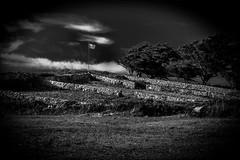 L'tendard noir et blanc (vedebe) Tags: noiretblanc netb nb bw monochrome bretagne paysages paysage ocean hanks much friend
