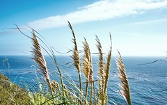 Wind (Tom -) Tags: landscape seaside seascape grass ocean wind light sunlight blue sony a7rii 50mm sky