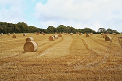 Hay bales.... (larigan.) Tags: field harvest farmland crop hay agriculture bales lullington larigan phamilton