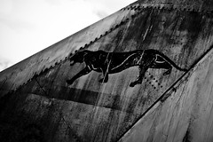 Black panther (Matthieu Lepoint photo) Tags: old blackandwhite animals plane french kent noiretblanc sale tail dirty peinture queue airforce animaux avion vieux reaction englang panthre aricraft mystere panthere airplanemilitaryjet